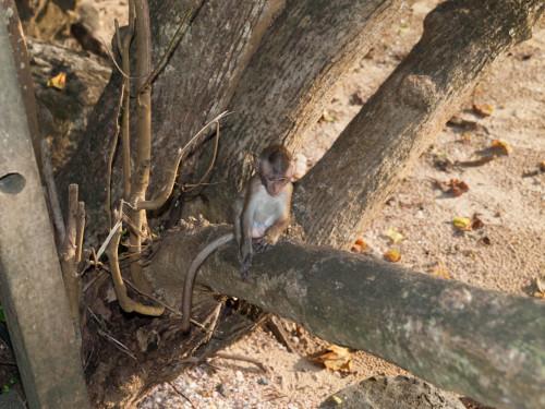 Maimutica pe plaja