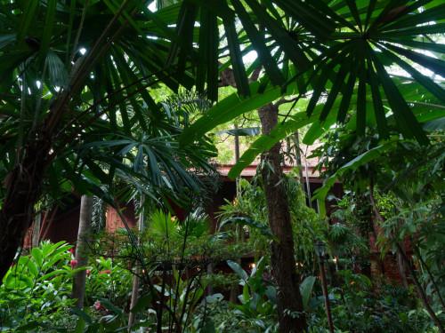 Verdele care inconjoara casa
