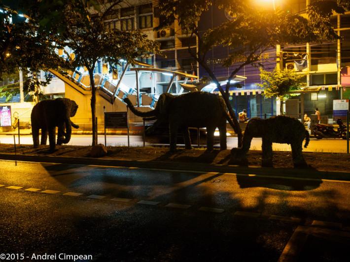 Elefanți din gard viu