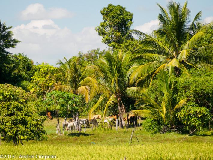 peisaj cambodgian