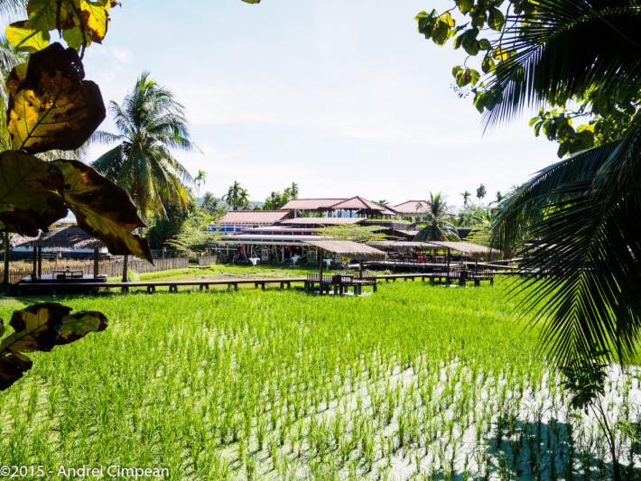 Verde de Langkawi